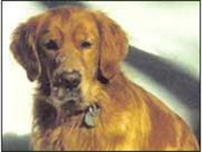Ev hayvanlarına yasal koruma